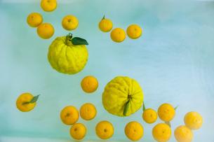 シシユズとユズの柚子風呂の写真素材 [FYI01429192]