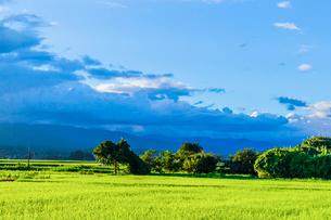 夏の夕方の稲田と雲の写真素材 [FYI01429206]