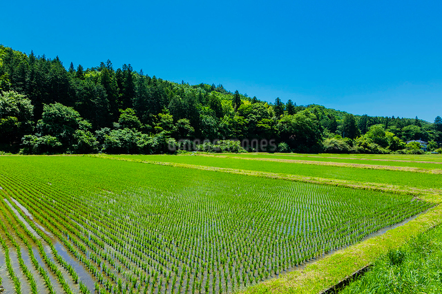 水田と里山と青空の写真素材 [FYI01429213]