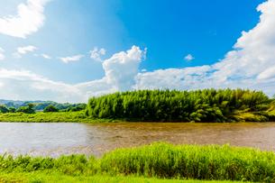 台風で増水した那珂川と竹林の写真素材 [FYI01429251]