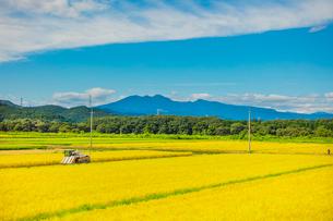 秋の稲田と高原山の写真素材 [FYI01429292]