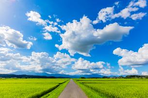 夏の稲田と道と雲と青空の写真素材 [FYI01429294]