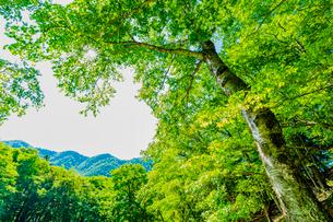 奥日光の外山の新緑の樹木の写真素材 [FYI01429305]