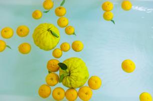 シシユズとユズの柚子風呂の写真素材 [FYI01429316]