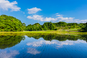 田植え後の水田と里山の風景の写真素材 [FYI01429408]