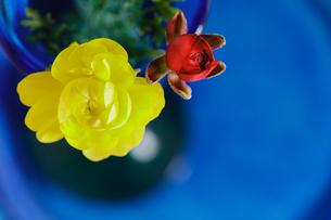 ラナンキュラスとミニバラの花の写真素材 [FYI01429437]