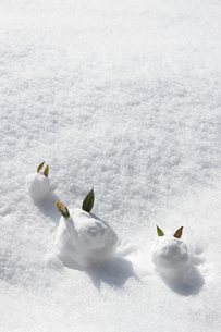 3匹の雪うさぎの写真素材 [FYI01429586]