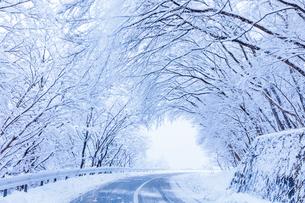 樹氷の雪道の写真素材 [FYI01429608]