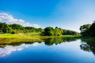 田植え後の水田と里山の風景の写真素材 [FYI01429643]