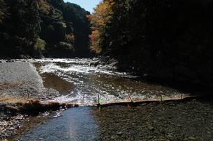 日高川の鮎の仕掛けの写真素材 [FYI01429860]