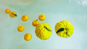 シシユズとユズの柚子風呂の写真素材 [FYI01429963]
