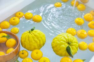シシユズとユズの柚子風呂の写真素材 [FYI01429984]