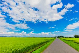 夏の稲田と道と雲と青空の写真素材 [FYI01430084]