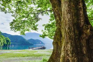 ハルニレの大木と中禅寺湖と男体山の写真素材 [FYI01430360]