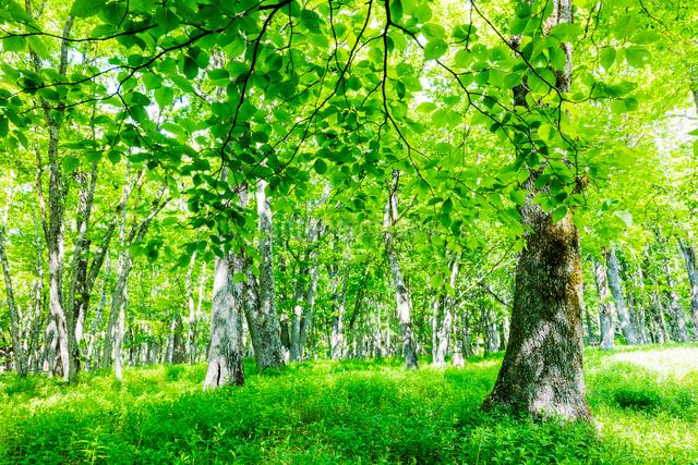 草原とハルニレとミズナラの森の写真素材 [FYI01430519]