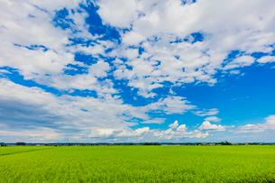 夏の稲田と雲と青空の写真素材 [FYI01430591]