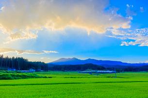 夏の稲田と夕方の雲の写真素材 [FYI01430606]