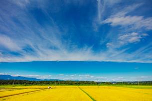秋の稲田と雲の写真素材 [FYI01430624]