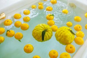 シシユズとユズの柚子風呂の写真素材 [FYI01430644]