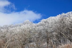 護摩壇山の樹氷の写真素材 [FYI01431249]