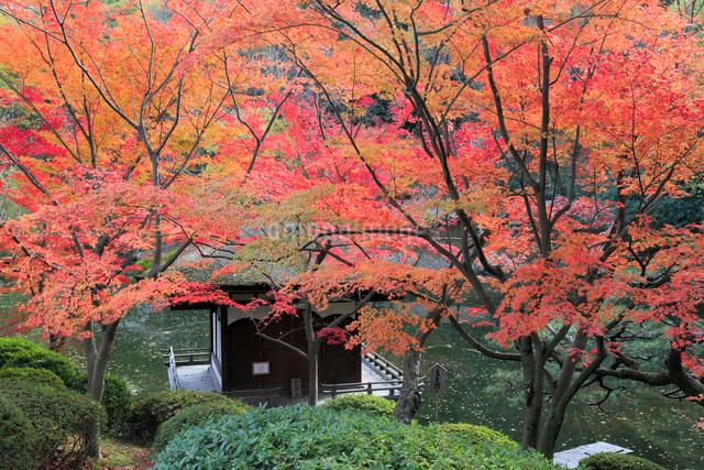 和歌山城の紅葉渓庭園の写真素材 [FYI01433918]
