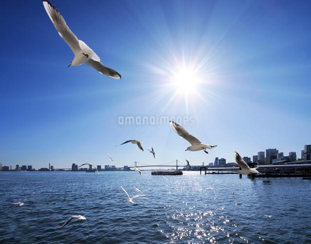 竹芝桟橋より日の出桟橋方向を望むの写真素材 [FYI01441351]
