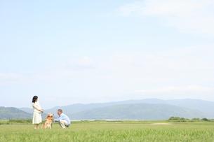 草原で犬と散歩するシニア夫婦の写真素材 [FYI01441372]
