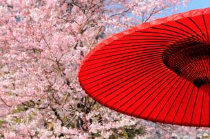 国立劇場の桜と和傘の写真素材 [FYI01441609]