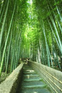 竹林と道の写真素材 [FYI01441619]