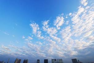 鱗雲とお台場のビル群の写真素材 [FYI01441709]