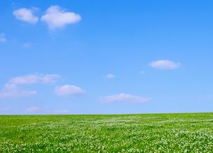 新緑のクローバの草原と五月の空の写真素材 [FYI01441719]