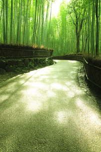 雨上がりの竹林道の写真素材 [FYI01441726]