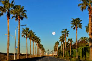 満月と舞浜のパームツリーの写真素材 [FYI01441757]