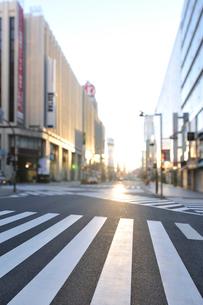 朝日に輝く新宿通りと横断歩道の写真素材 [FYI01441801]