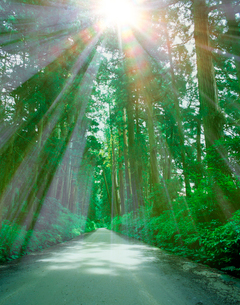 木漏れ日の日光杉並木街道の写真素材 [FYI01441816]