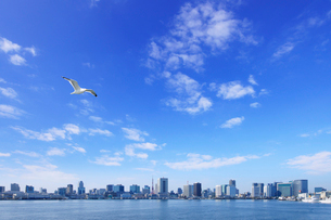 海上から見る東京都心のビル群とかもめの写真素材 [FYI01441833]