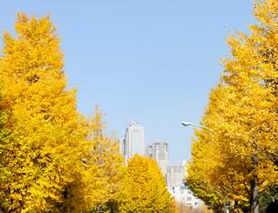 銀杏並木と新宿副都心ビル群の写真素材 [FYI01441868]
