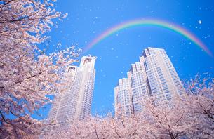 虹と桜吹雪と都庁舎の写真素材 [FYI01441890]