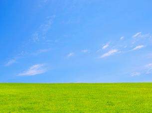 新緑の芝生と青空の写真素材 [FYI01441939]