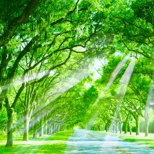 木漏れ日の小道の写真素材 [FYI01441969]