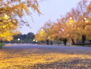行幸通りの黄葉のイチョウ並木の写真素材 [FYI01441986]