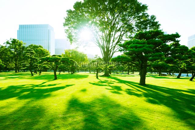 新緑と早朝の皇居外苑の写真素材 [FYI01441999]