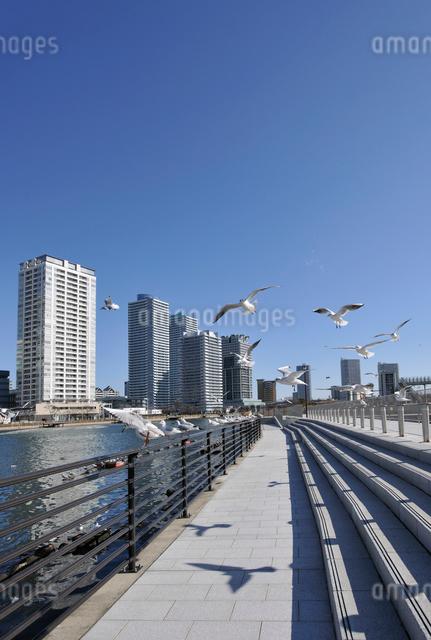横浜ポートサイド地区の高層タワーマンション群の写真素材 [FYI01442062]