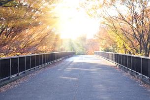 秋の歩道橋の写真素材 [FYI01442098]