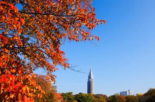 紅葉とドコモタワーの写真素材 [FYI01442114]