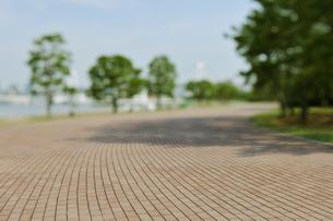 潮風公園の石畳の遊歩道と木立の写真素材 [FYI01442126]