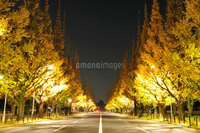 神宮外苑のイチョウ並木の黄葉の夜景の写真素材 [FYI01442135]
