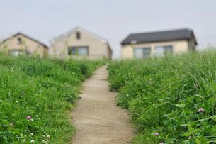 草原の小道の写真素材 [FYI01442154]