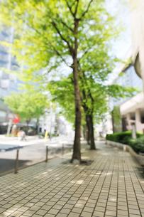 街路樹と石畳の歩道の写真素材 [FYI01442189]