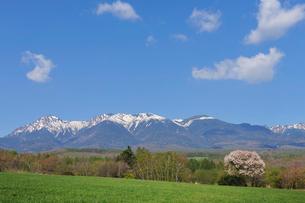 ヤマナシの花咲く残雪の八ヶ岳の写真素材 [FYI01442226]